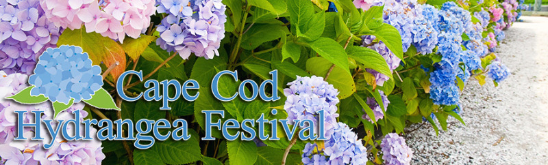 Hydrangea-Fest-Header-with-logo